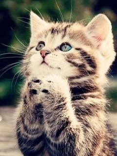 Dowload hình nền đẹp – Mèo con siêu dễ thương