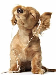 Hình nền điện thoại cực cool - Chú chó phong cách