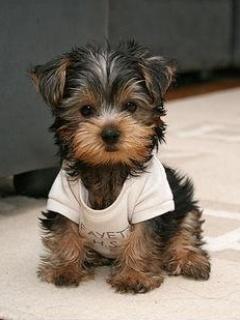 Hình nền cún yêu cực kỳ dễ thương