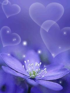 Hình nền hoa tim tình yêu cho dt samsung