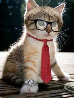 Hình nền chú mèo bác học cực kute