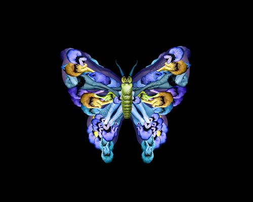 Hình nền bướm nhỏ nhỏ xinh xinh
