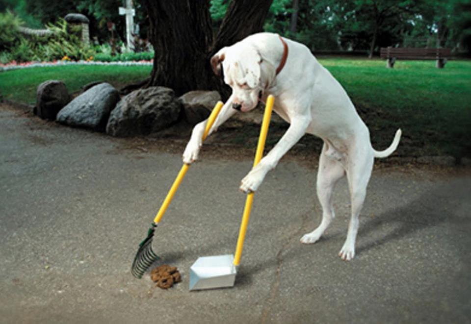 Hình nền vô cùng hài hước – Chó cũng lao động như ai