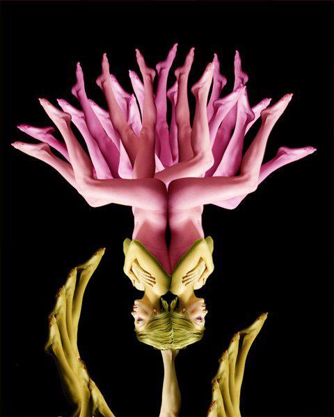 Hình nền bông hoa cực kỳ độc đáo