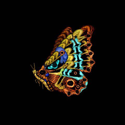 Hình nền con bướm xinh, con bướm đa tình