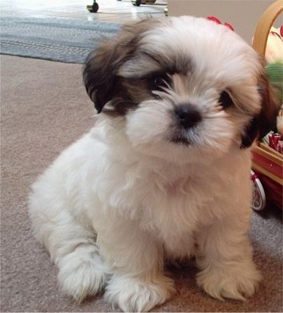 Hình nền đẹp - Chú chó siêu dễ thương