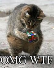 Hình nền hài hước - Mèo cũng chơi game xếp hình