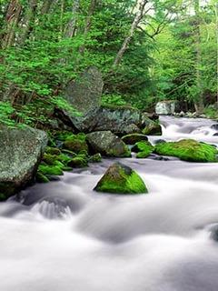 Hình nền thiên nhiên tuyệt đẹp cho điện thoại