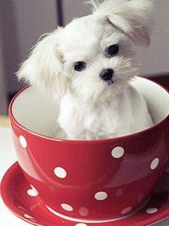 Hình nền dtdd - chó ngồi trong cốc cực dễ thương