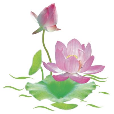 Hình nền hoa sen đẹp nhất cho dế yêu