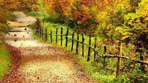 Hình nền mùa thu đầy lãng mạn