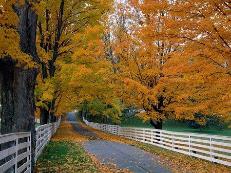 Hình nền thiên nhiên đẹp nhất cho dế yêu