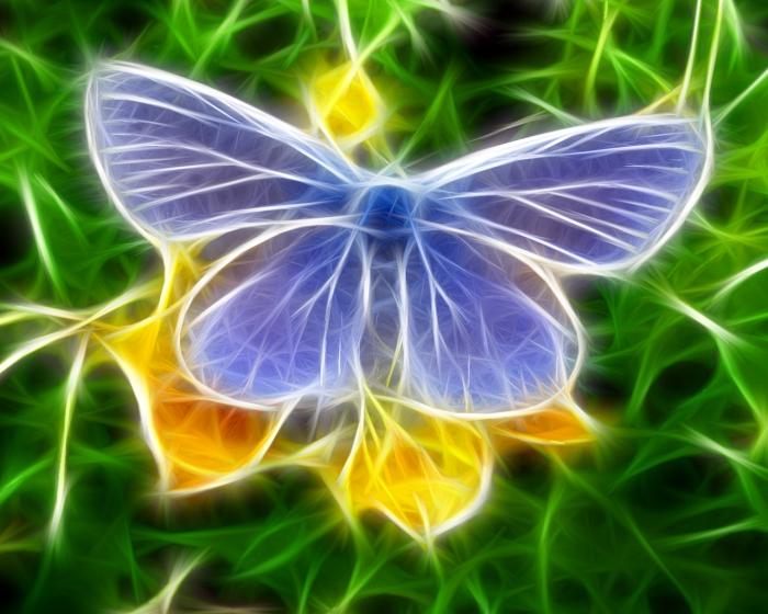 Hình nền 3D con bướm xinh đẹp nhất cho điện thoại
