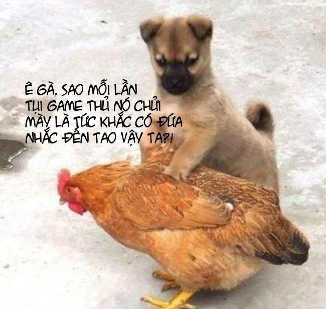 Hình nền hài hước - Chó hỏi tội gà