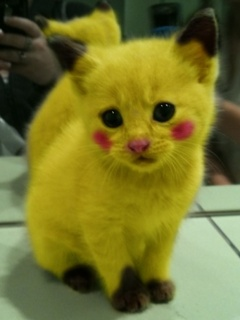 Hình nền hài hước - Chú mèo anh em với Pokemon