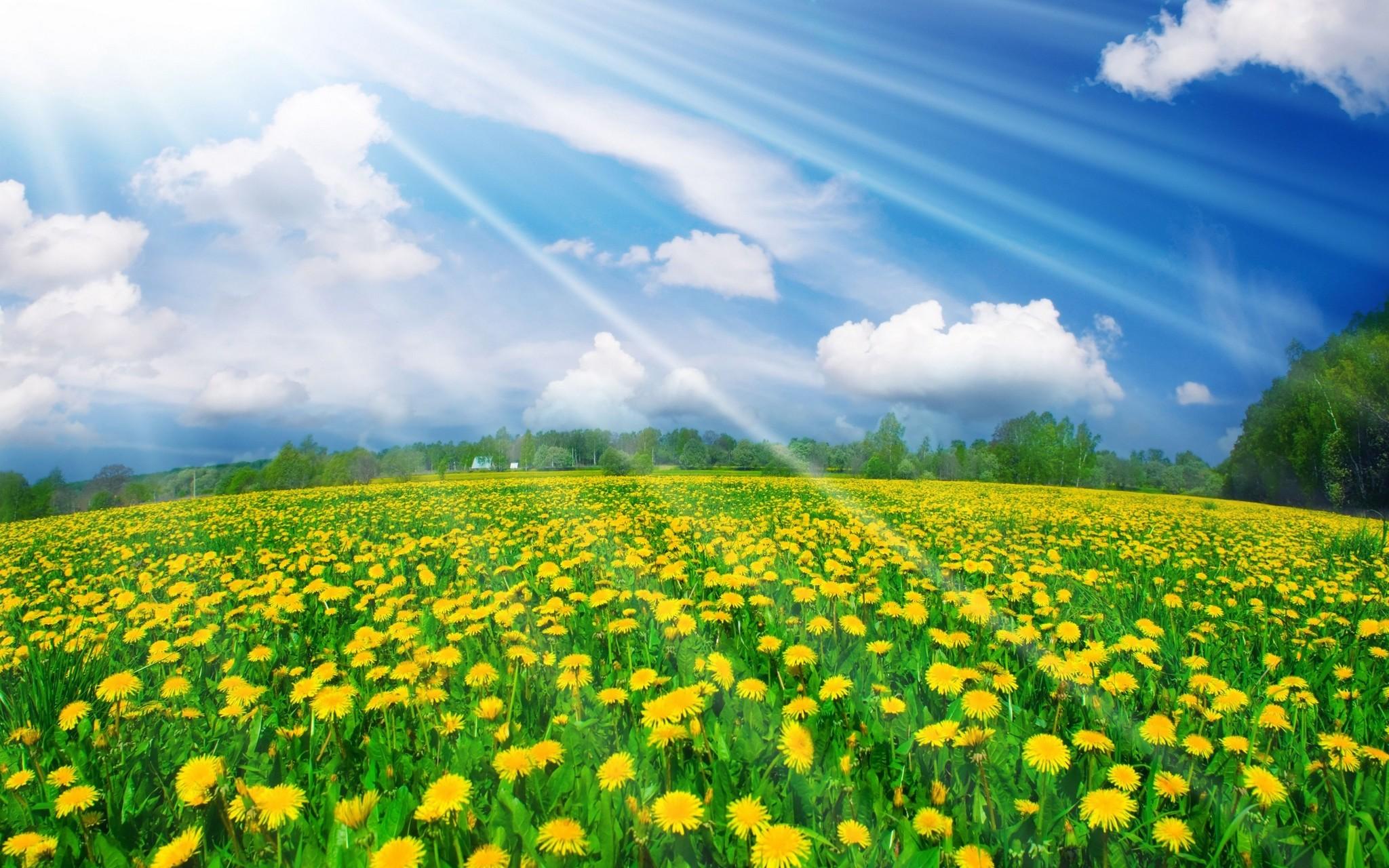 Hình nền thiên nhiên khu vườn hoa tuyệt đẹp