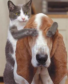 Hình nền hài hước – Chó mèo chơi bịt mắt bắt dê