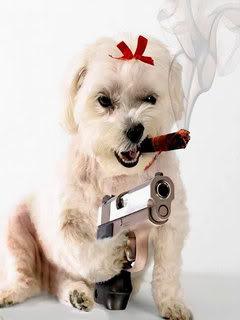 Hình nền hài hước - Đừng đùa với chó