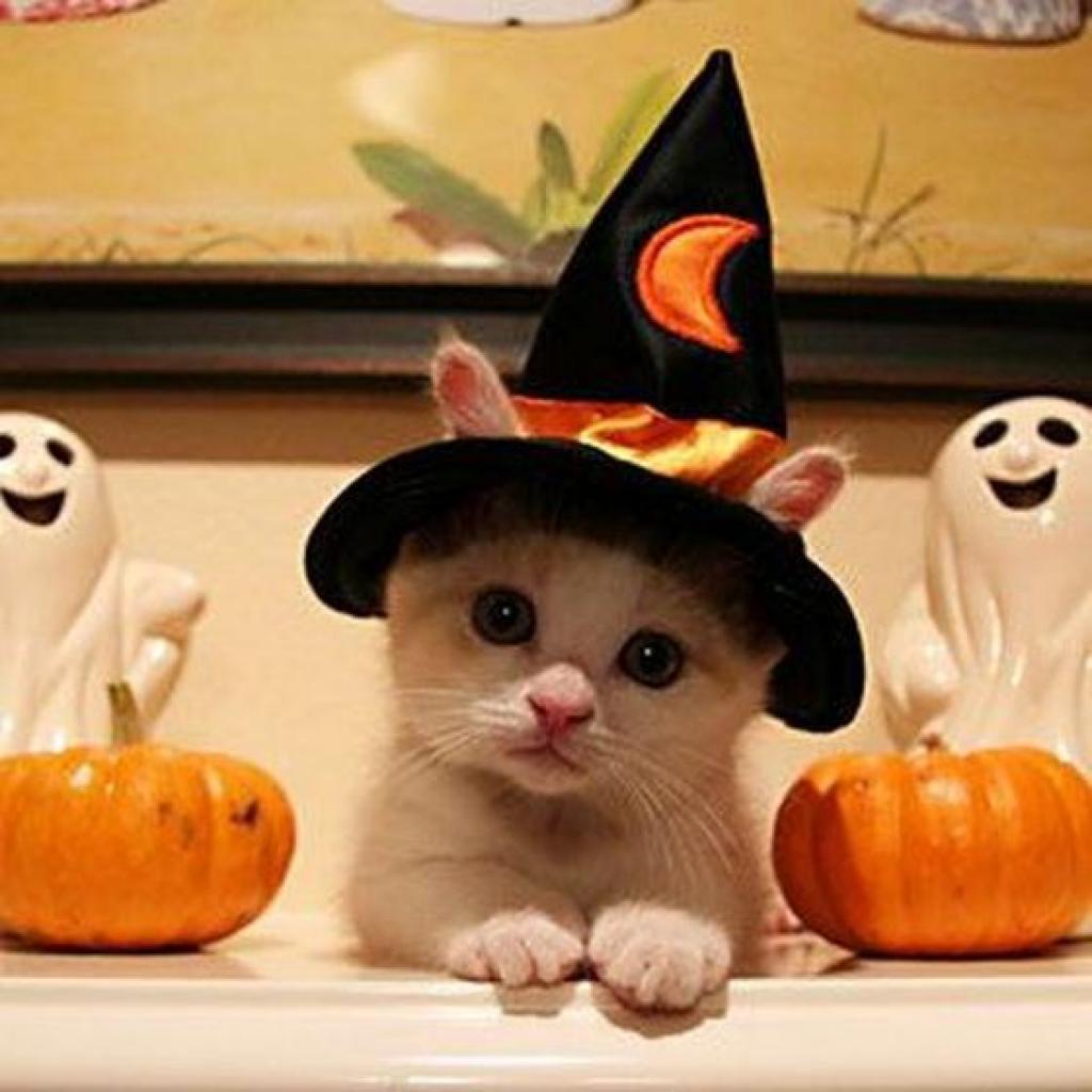 Hình nền hoạt hình - Chú mèo phù thủy đáng yêu