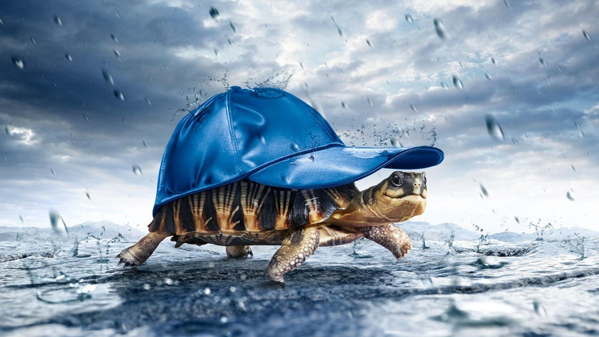 Hình nền hoạt hình – Rùa đội mưa đi chơi