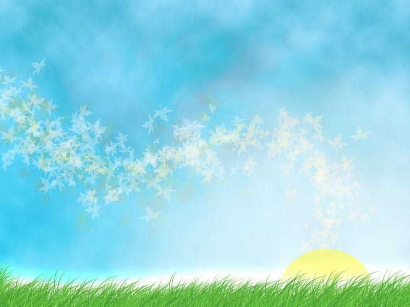 Hình nền mùa hè - Cánh đồng xanh tươi mát