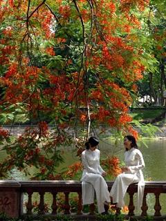 Hình nền mùa hè tỏa nắng cùng 2 nữ sinh