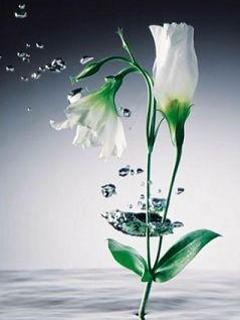 Hình nền 3D - Bông hoa mềm mại như nước
