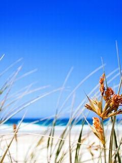 Hình nền mùa hè – Bầu trời xanh tuyệt đẹp