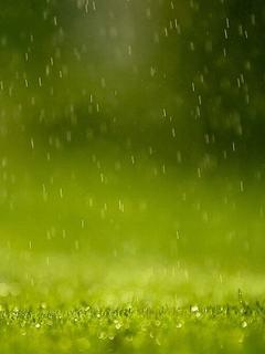 Hình nền mùa hè - Cơn mưa đẹp lãng mạn
