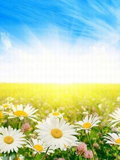 Hình nền mùa hè đẹp rạng ngời