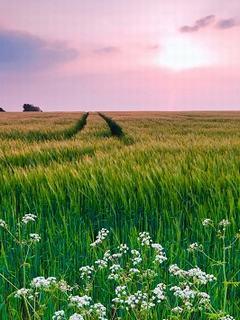 """Hình nền mùa hè – Đồng xanh rì rào """"nhìn là mát"""""""