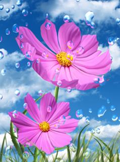 Tải hình nền mùa hè - Hạt mưa trong vắt cực đẹp