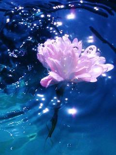 Hình nền 3D - Bông hoa lóng lánh dưới nước