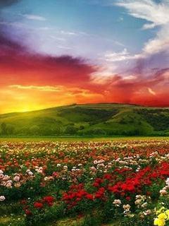 Hình nền mùa hè – Cánh đồng hoa muôn sắc