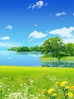 Hình nền mùa hè - Hoa vàng cỏ xanh đẹp ngất ngây