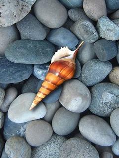 Tải hình nền mùa hè – Ốc biển cực đẹp