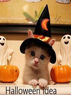 Ảnh Halloween dễ thương – Chú mèo hóa trang cực đẹp