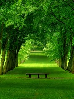 Hình nền điện thoại thiên nhiên đẹp yên bình