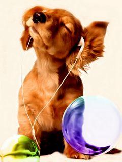 Tải hình nền cho di động - Chú chó sành điệu