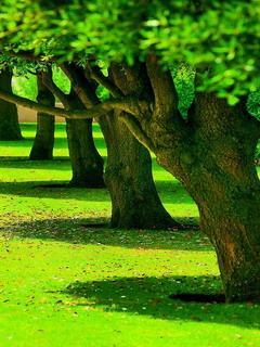 Hình nền 3d – Hàng cây xanh trong nắng tuyệt đẹp