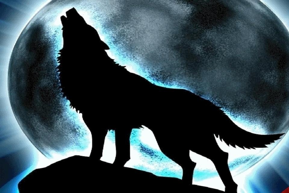 Hình sói 3D cực đẹp và ấn tượng