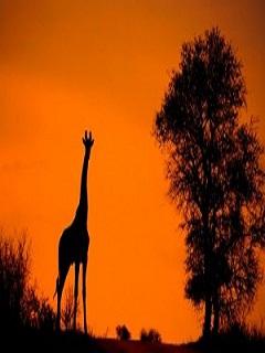 Những hình ảnh đẹp về thiên nhiên hoang da nhất