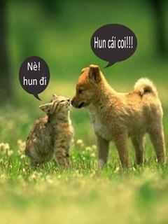 Hình nền hài hước – tình yêu giữa chó và mèo