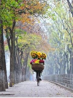 Hình nền mùa thu Hà Nội đẹp xao xuyến lòng người