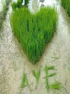 Hình nền tình yêu độc nhất vô nhị – Anh yêu em