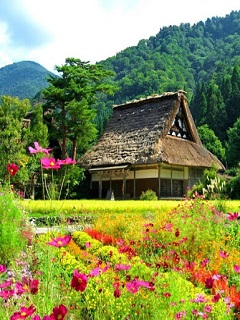 Những bức ảnh đẹp về thiên nhiên và hoa xinh xinh đáng yêu