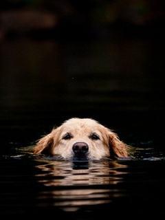 Hình nền mùa hè - Chú chó tắm mát