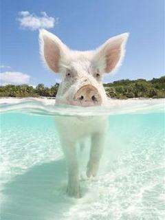 Hình nền mùa hè đi biển tránh nóng cực hài