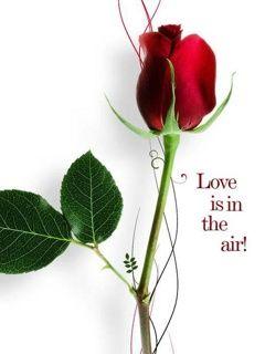 Hình nền tình yêu trong từng hơi thở