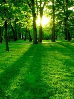 Ảnh phong cảnh thiên nhiên đầy tươi mát